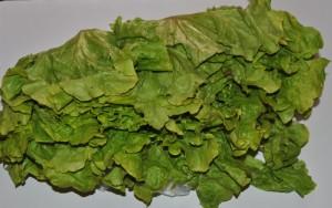 Lechuga: ayuda a regurgitar los alimentos durante la cría del pichón y tiene un alto contenido en agua.