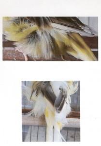 Figura 7-9  Ala no cruzada y ala algo cruzada, aunque no exageradamente